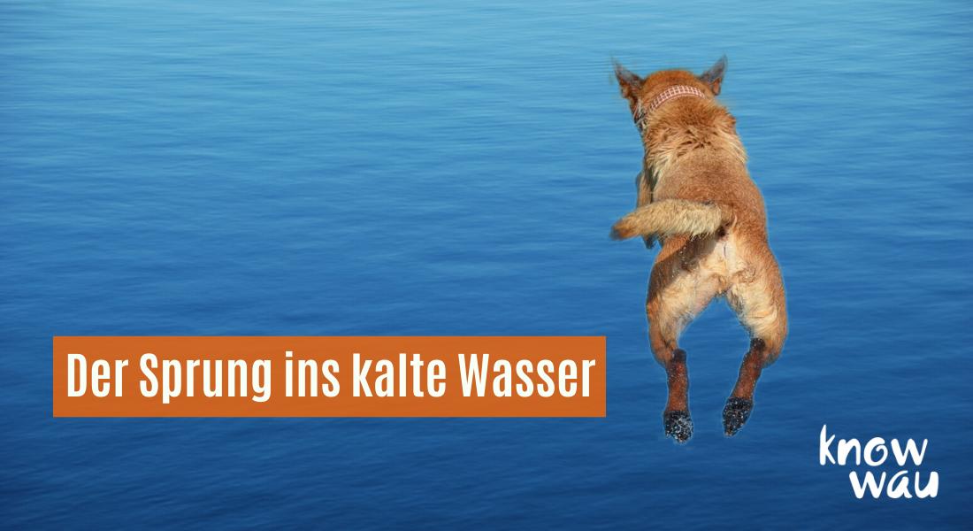Hund beim Sprung ins kalte Wasser
