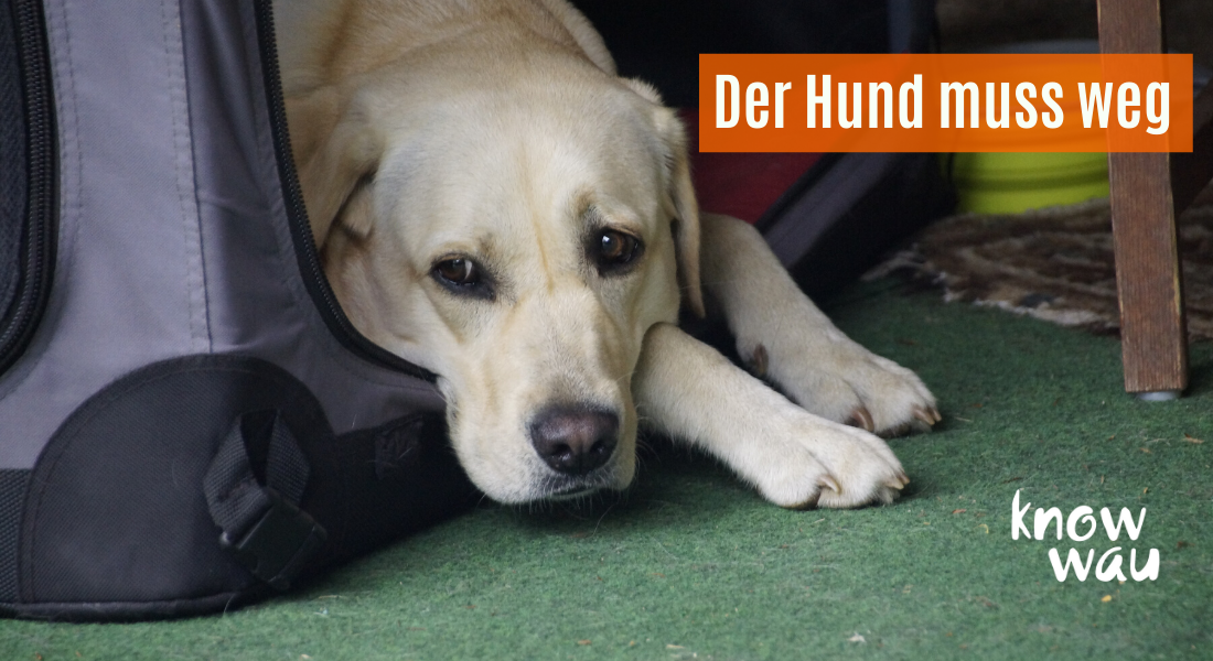 Hund in der Box