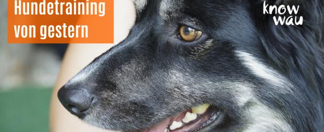 Hundetraining von gestern oder mit Blick auf den Hund