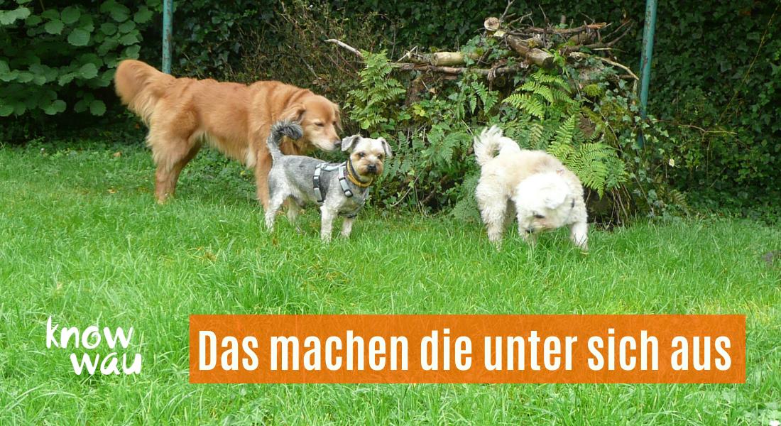 Hunde sind soziale Tiere