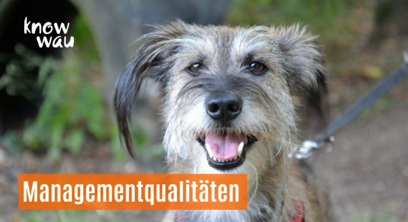 Hundehaltung braucht Management
