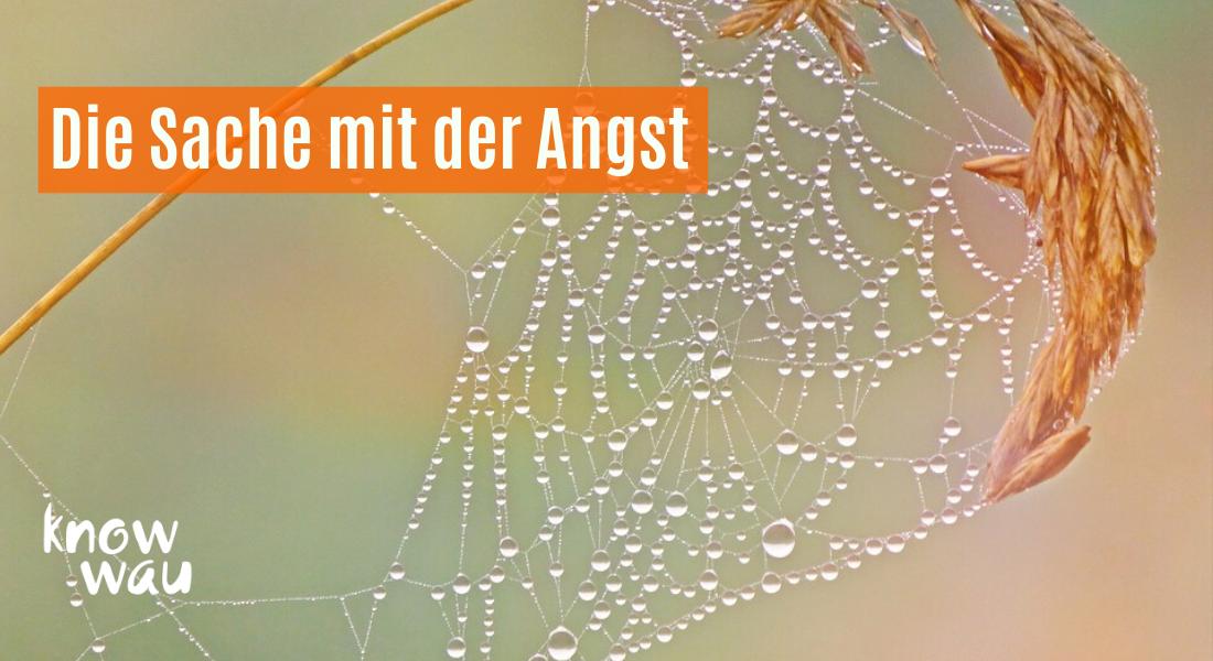 Im Spinnenetz der Angst gefangen