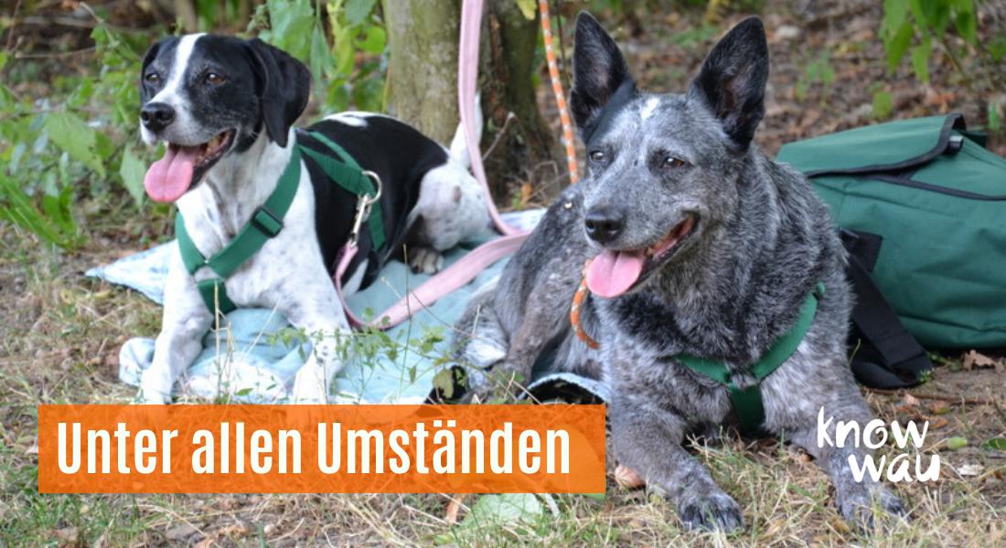 Hunde warten trotz Ablenkung