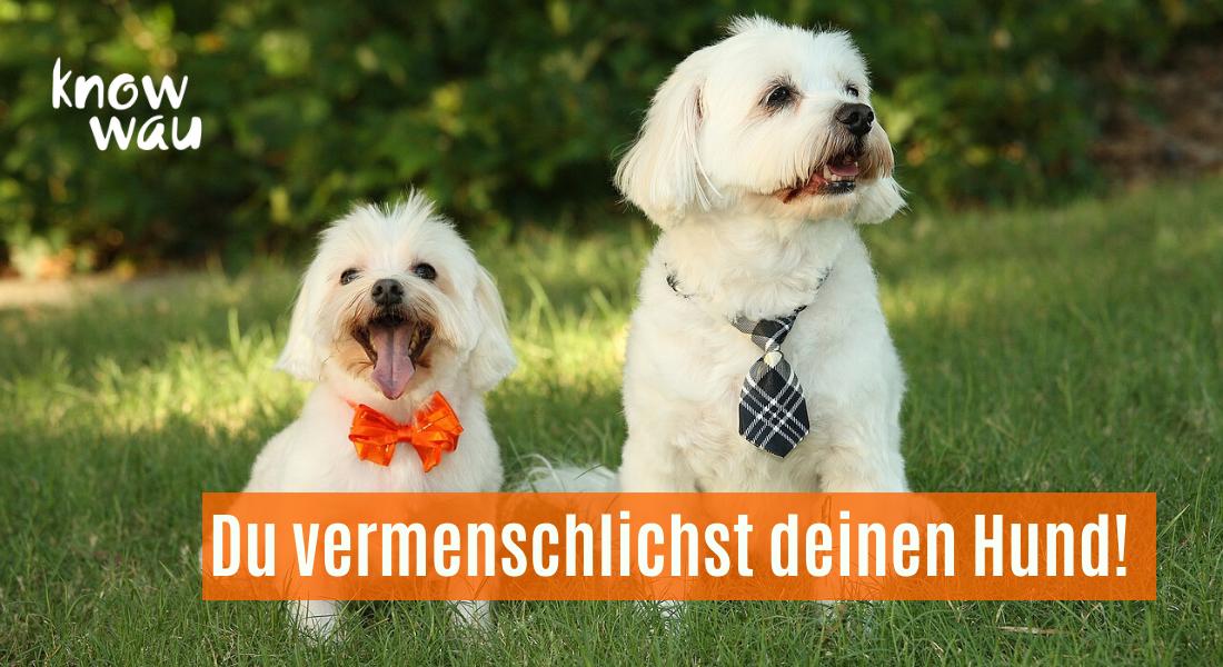 Hunde mit Schlips und Kleidung
