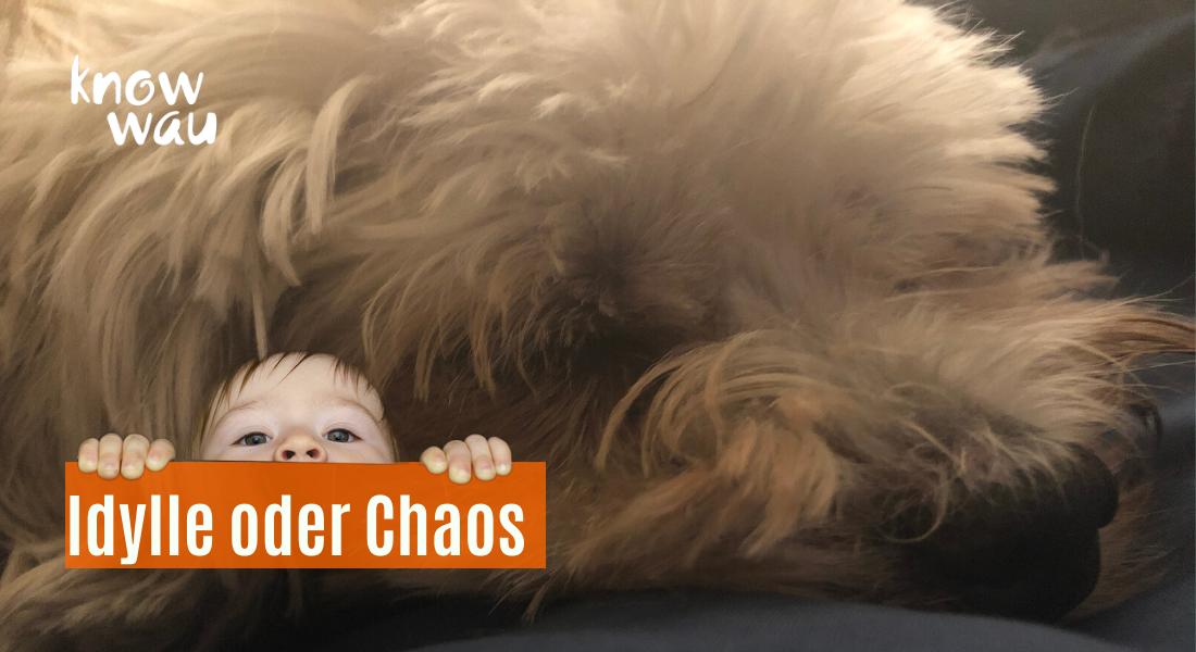 Idylle oder Chaos