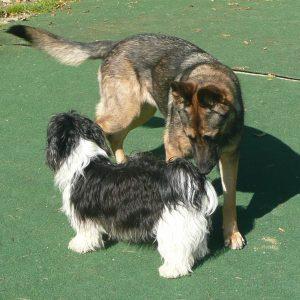 jugendliche hunde