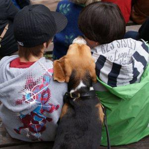 Beagle mit Kindern