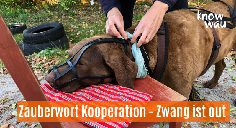 Zauberwort Kooperation - Zwang ist out