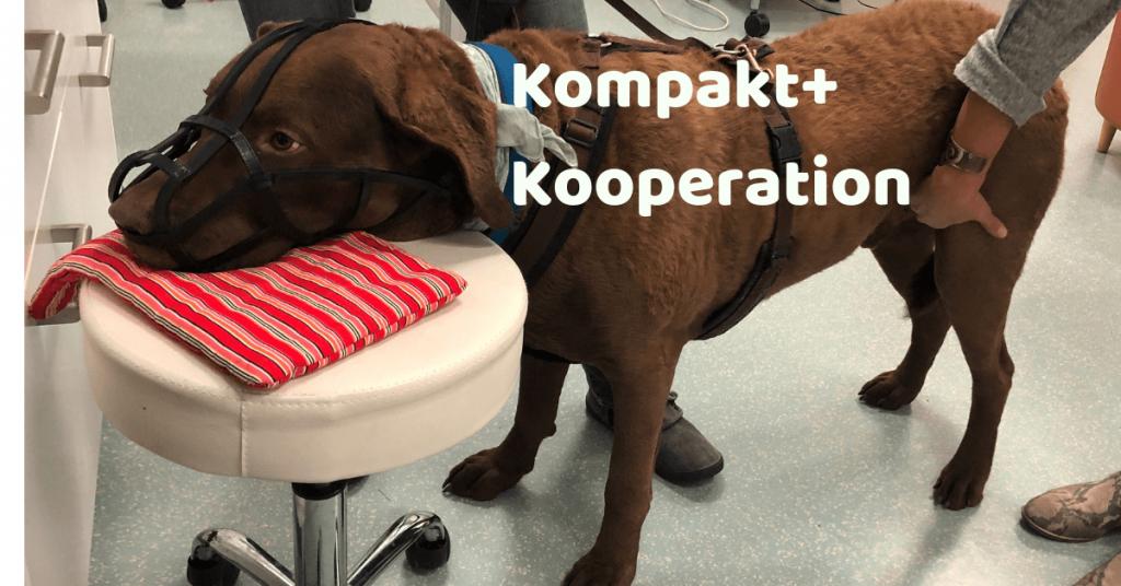 Kooperationstraining beim Tierarzt