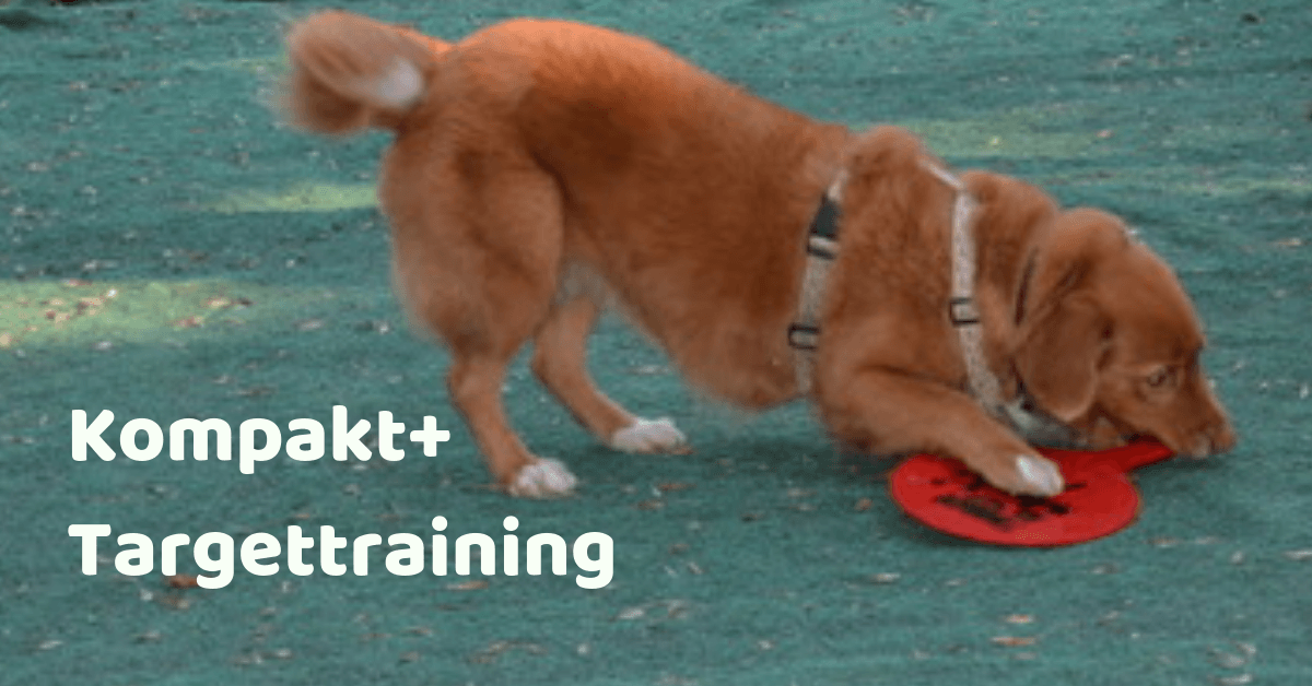 Kompakt+ Workshop Targettraining