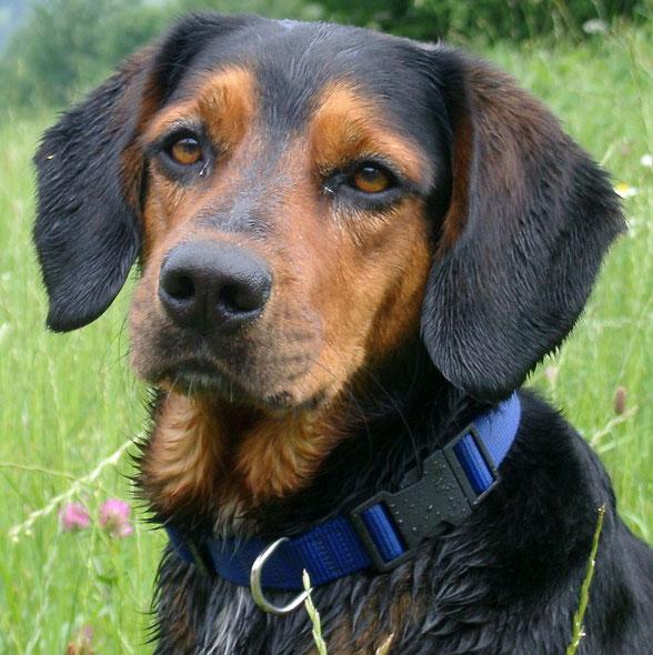Trauer, Schock, Angst, Verzweiflung treffen auch Hunde