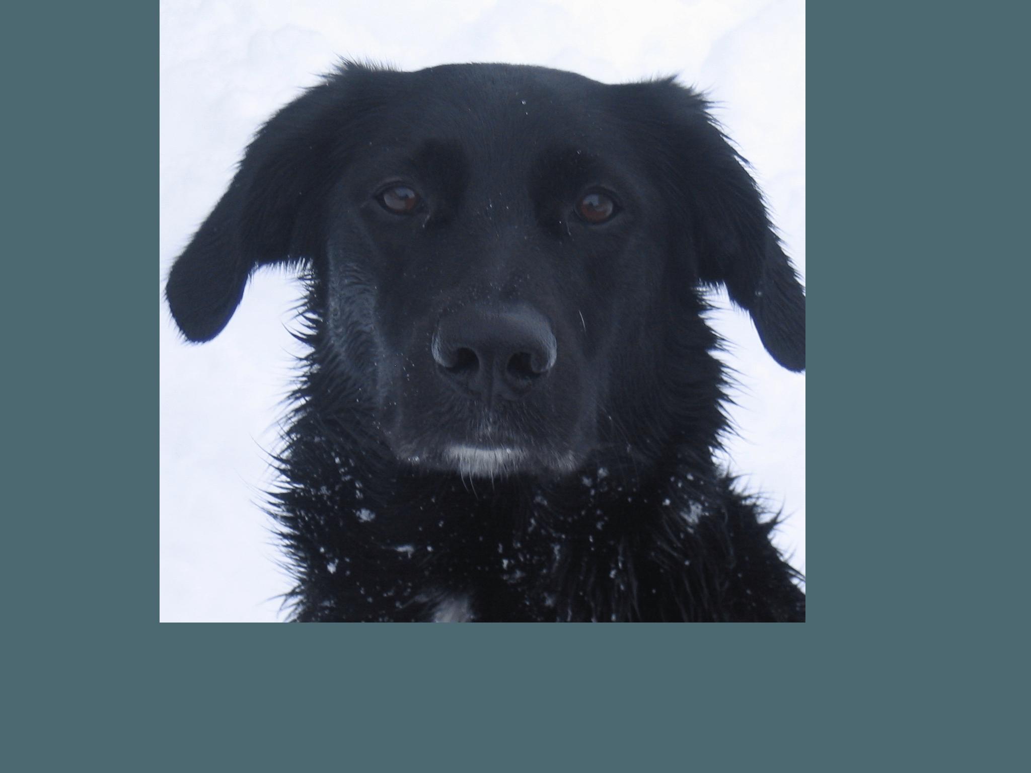 schwarzer hund im workshop anti gift
