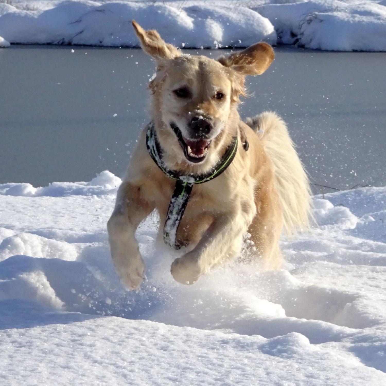 Wintertraining mit Hund, Urlaubs- und Intensivttraining im Salzburger Land