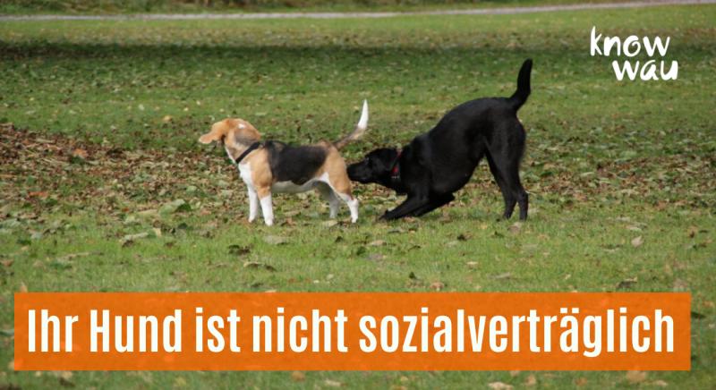 Ihr Hund ist nicht sozialverträglich?