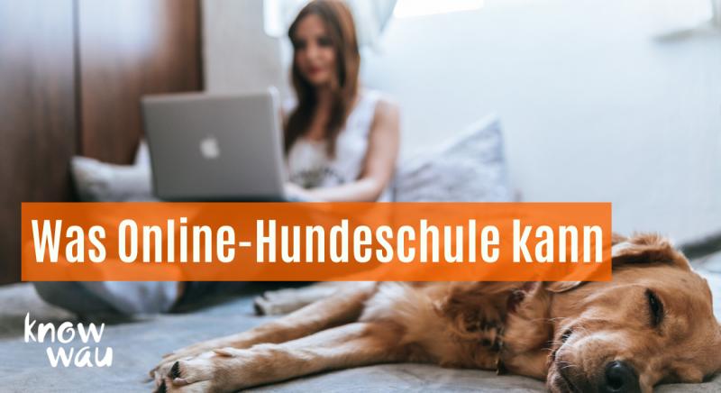 Was Online Hundeschule kann