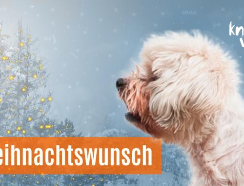 Weihnachtswunsch einer Salzburger Hundehalterin