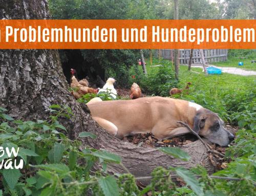 Von Problemhunden und Hundeproblemen
