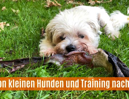 Von kleinen Hunden und Training nach Maß