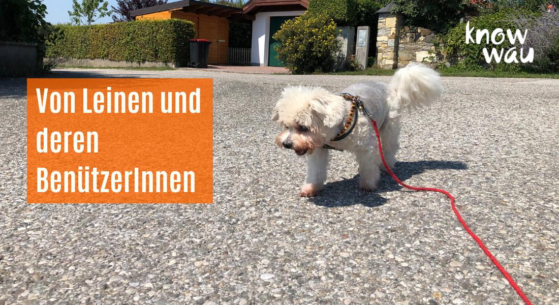 Kleiner Hund an langer Leine