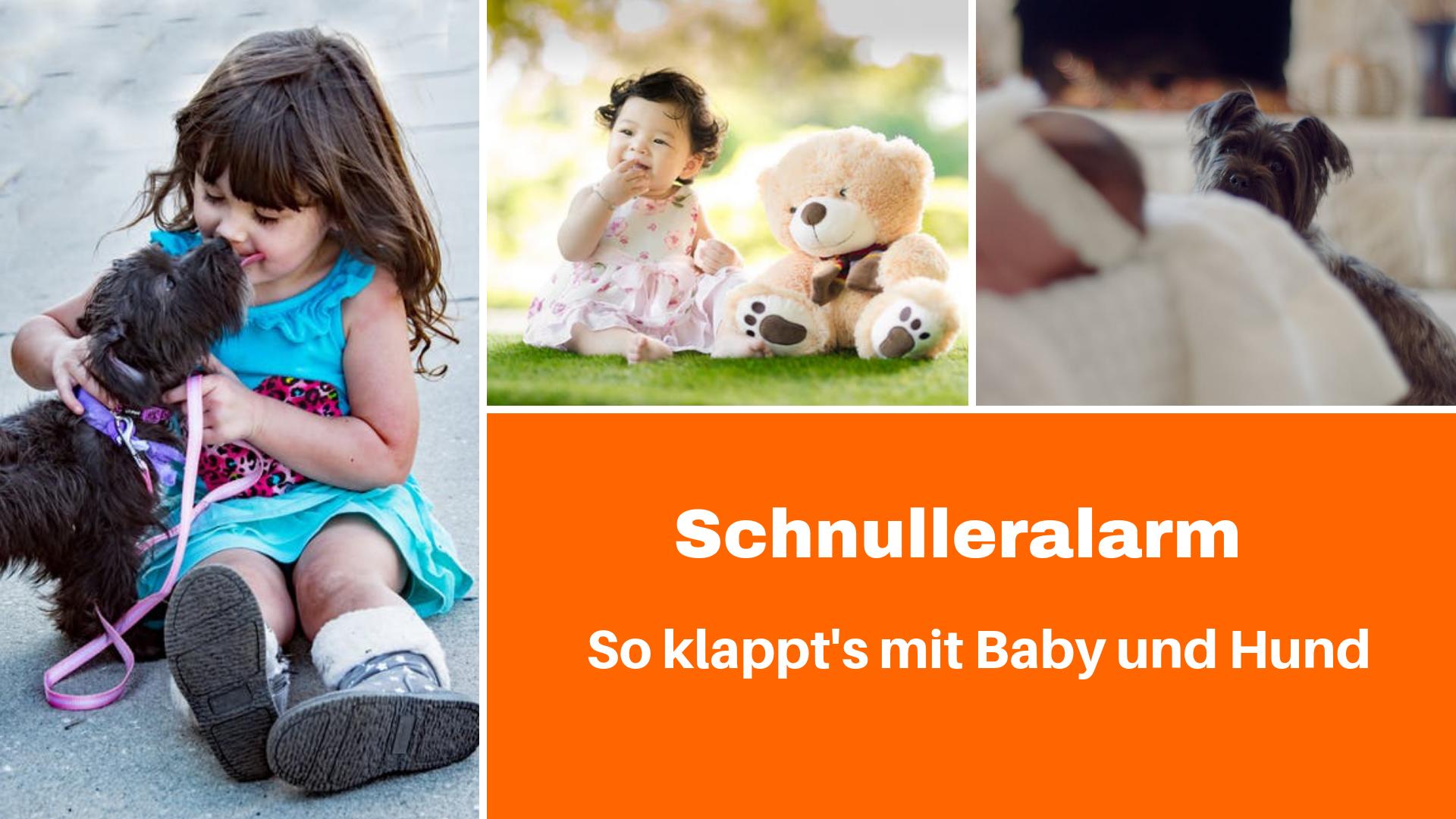 So klappt's mit Baby und Hund, Onlinevortrag