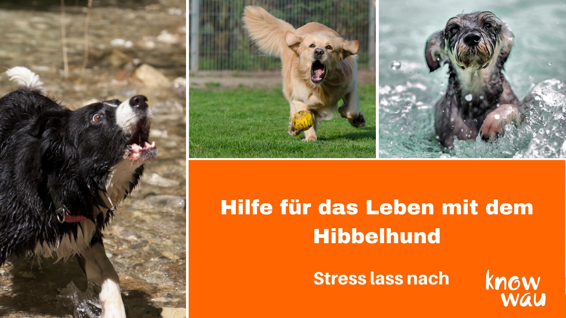 Hund kommt nicht zur Ruhe, Onlinevortrag