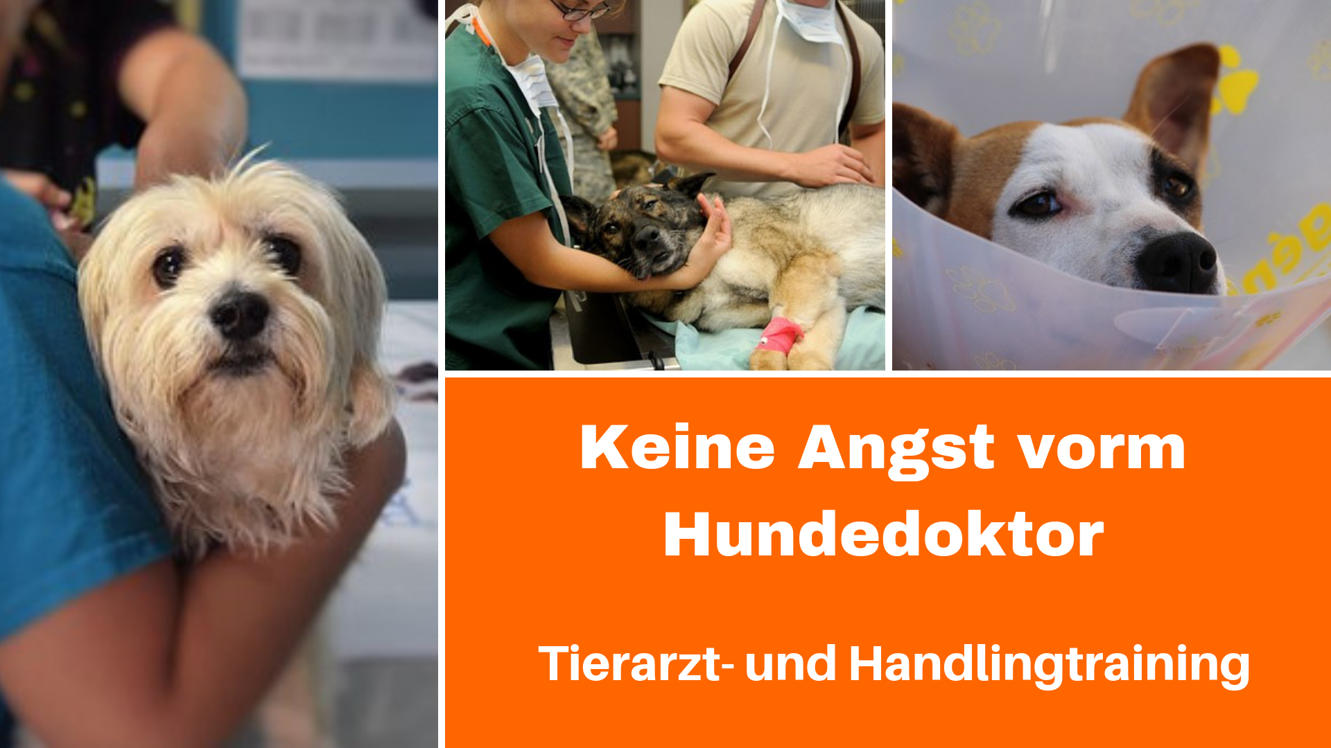 Medical Training mit Hund