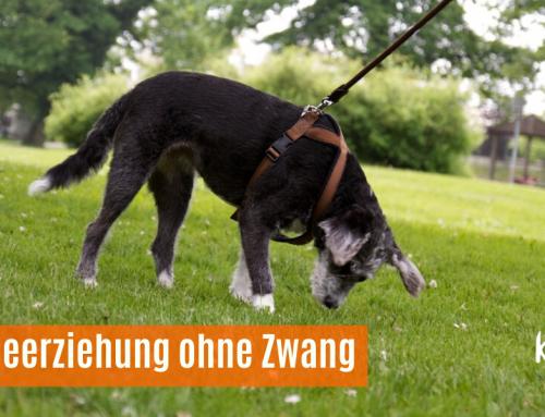 Hundeerziehung ohne Zwang?