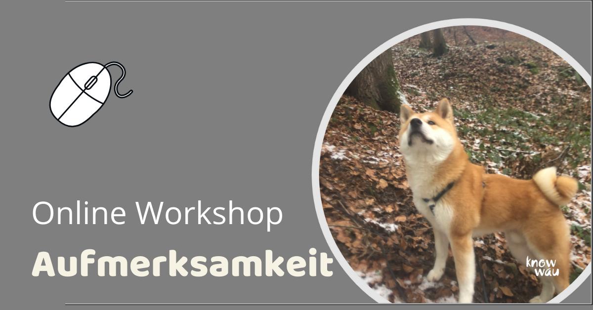 Workshop Aufmerksamkeit