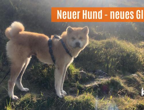 Neuer Hund, neues Glück
