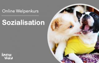 Sozialisation, Welpenkurs