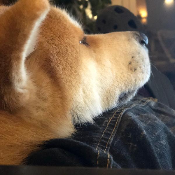 Hund vertraut Mensch