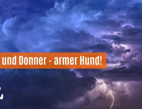 Blitz und Donner – armer Hund!